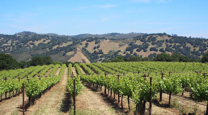 ナパのワイン畑