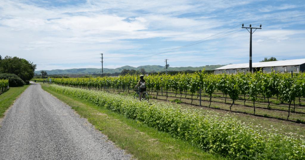 自転車でワイナリーを巡るNZサイクルトレイル