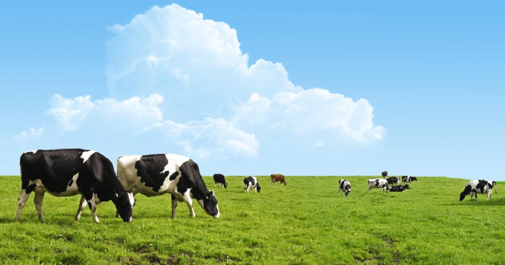 牛が殿堂入り!?5月のニュージーランド動物ニュース